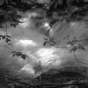 Waltz in the Woods